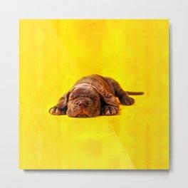 Cane Corso - Italian Mastiff Puppy Metal Print