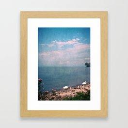 SWANS AT THE LAKE Framed Art Print