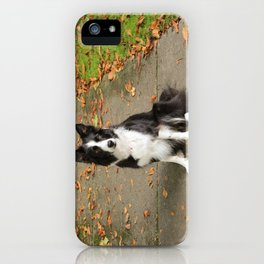 Sparkles the Border Collie iPhone Case