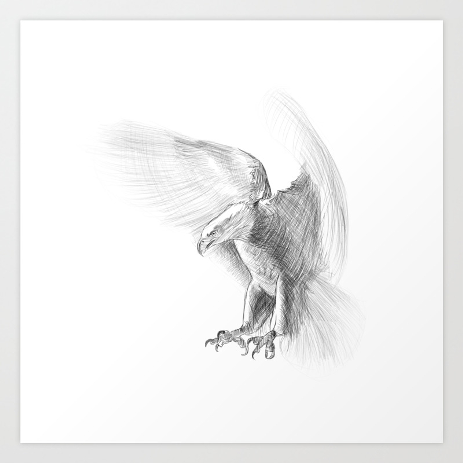 Eagle pencil drawing art print
