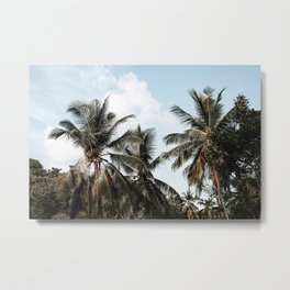 palm trees ii / sri lanka Metal Print