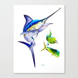 White Marlin Chasing Dolphin Fish Canvas Print
