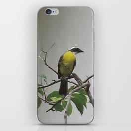 Chichen Itza Bird iPhone Skin