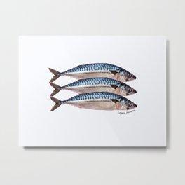 Fresh Cornish Mackerel Metal Print