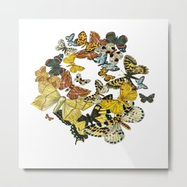 A Kaleidoscope Of Vintage Butterflies Vector Metal Print