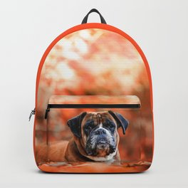 Autumn Pug Backpack