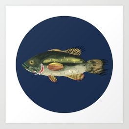 Black Bass Art Print