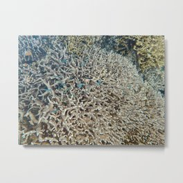 Large Pacific Ocean corals Metal Print