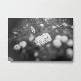 POPCORN FLOWERS Metal Print