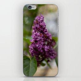 Fresh Purple Lilac iPhone Skin