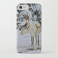 finland iPhone & iPod Cases featuring Reindeer in Lapland Finland by Guna Andersone & Mario Raats - G&M Studi