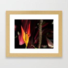 Tropical Blooms in Costa Rica Framed Art Print