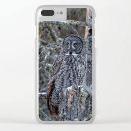 Great Gray Owl on a Snag Clear iPhone Case