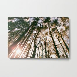 Highland Forest Metal Print