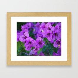 Bougainville in purple Framed Art Print