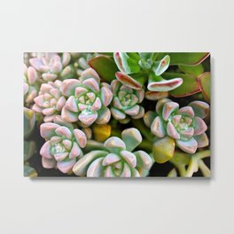 Dewy Delights Metal Print