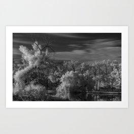 R72 Tree Vision Art Print