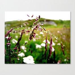 Summer tears Canvas Print