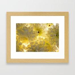Lighted Chrysanthemums Framed Art Print