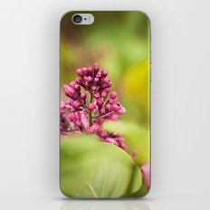 Syringa 2 iPhone & iPod Skin
