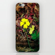 Only when there is sun iPhone & iPod Skin
