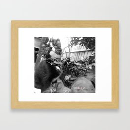 [Photography Prints] Kitten Kou Framed Art Print