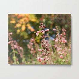 Pink Wildflowers in Autumn | Schiller Park Columbus Metal Print