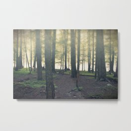 Forest - Through the Trees Metal Print