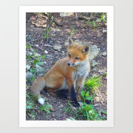 fox 2018-4 Art Print