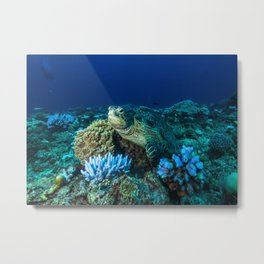 Sea Turtle on the Great Barrier Reef Metal Print