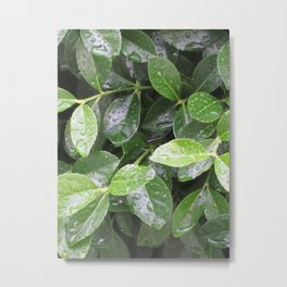 Nature Refreshed Metal Print