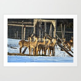 Whitetail Deer Stare Down Art Print