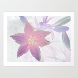 Lily Inversion Art Print