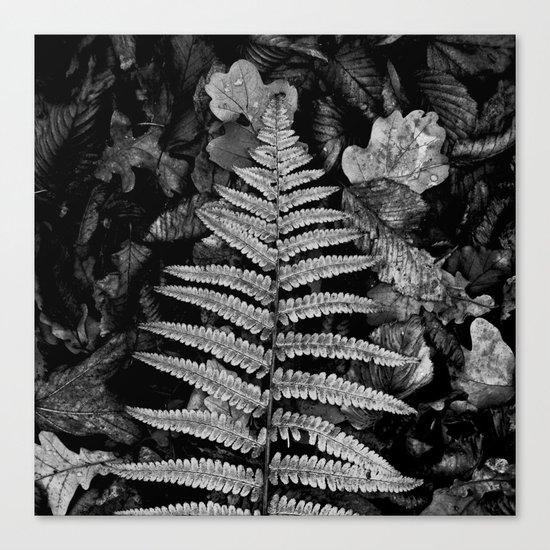 fern leaf VI Canvas Print