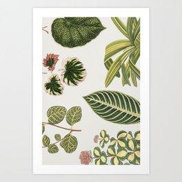 Green Botanical Plants Watercolor Pattern Art Print