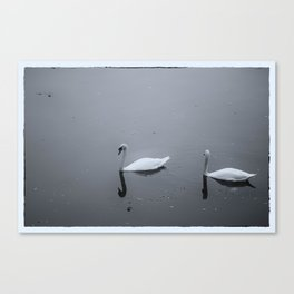 Swans on a lake Canvas Print