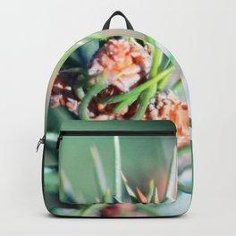 Spruce branch in spring. Backpack