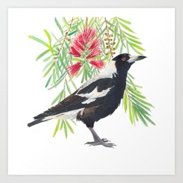 Australian Magpie and bottlebrush tree brach with red flowers watercolour painting Art Print
