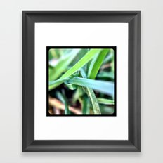 Grass. Framed Art Print