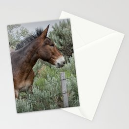 Mule in Wyoming Stationery Cards