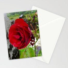 She, a Rose Stationery Cards