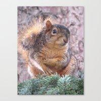 squirrel Canvas Prints featuring Squirrel by Sarahpëa
