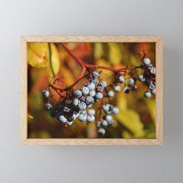 Fall Elderberries. Framed Mini Art Print
