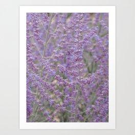 Lavender Field in Brussels Belgium Art Print