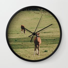 Field of Horses in Ireland  Wall Clock