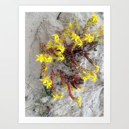 HAIRY COLLECTION (24) Art Print