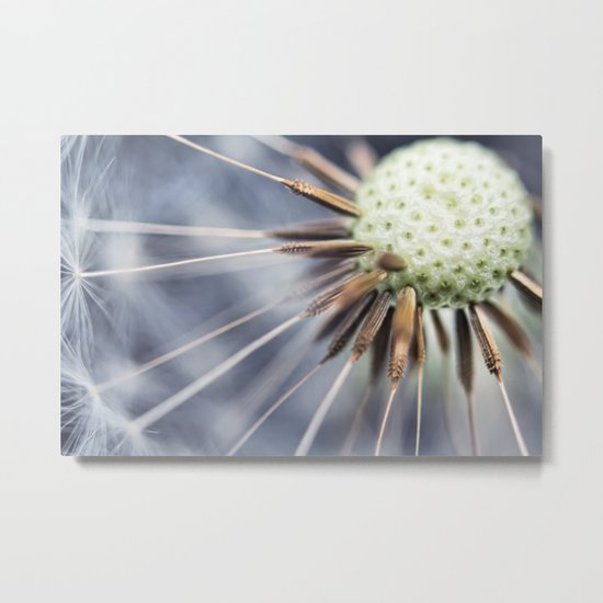 Dandelion fluff... 3 Metal Print
