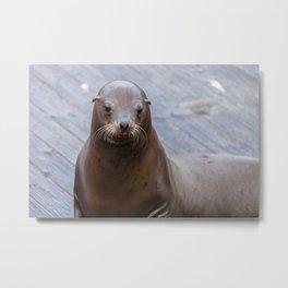 Portrait of a Sea Lion Metal Print