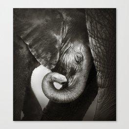Baby elephant seeking comfort Canvas Print