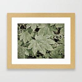 Leaves on the Misty Mountain Top. Framed Art Print